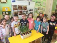 Зелёный лук-для здоровья лучший друг! За окном еще зима, а у нас в группе «Речецветики» наступила весна – мы посадили огород на окне, зеленый лучок. Дети приносили из дома луковицы и сами высаживали их в лоточки. Уже появились первые зеленые ростки и