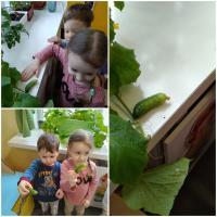 Веселый огород.  Вот и первый урожай! Как прекрасно вырастить своими руками овощи.  Огурчики оказались очень вкусными!
