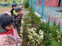 В группе «Любознатики» прошла тема недели под названием «Мир растений». Ребята наблюдали за природой на участке сада, познакомились с новыми растениями, также узнали какие из представителей флоры могут прижиться на нашем крайнем севере в летнее время